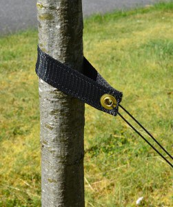 Tree Support Straps Application