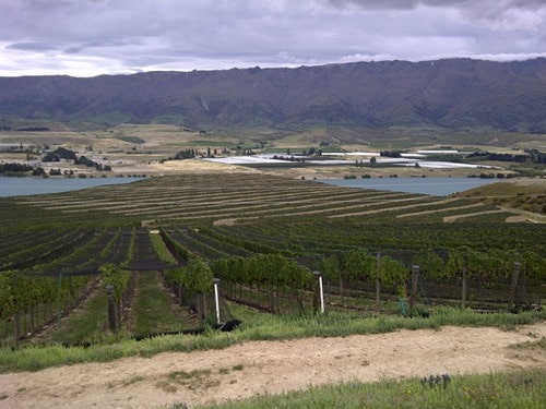 Vineyard Multi Row Amp Drape Netting Americannettings
