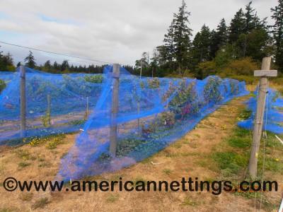 Big Bug (Vineyard) Netting Application