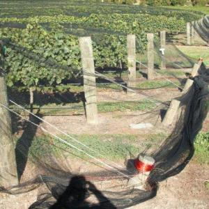 Vineyard- Multi-Row & Drape Netting