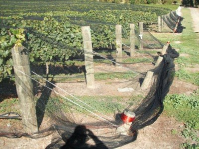 Vineyard - Multi-Row & Drape Netting