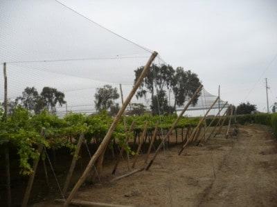 Premium Plus Vineyard Netting