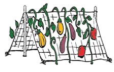 Trellis System Illustration