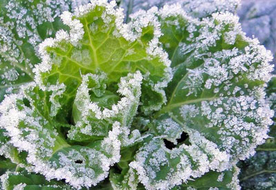 how to winterize a garden