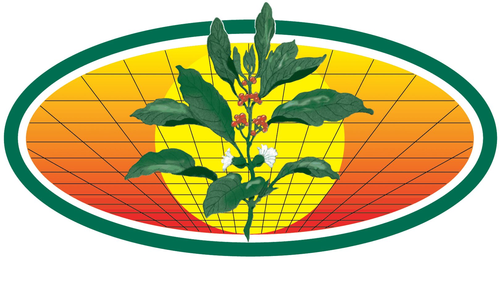American Nettings & Fabric