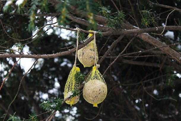 The best types of bird netting are used depending on the type of bird and the crop